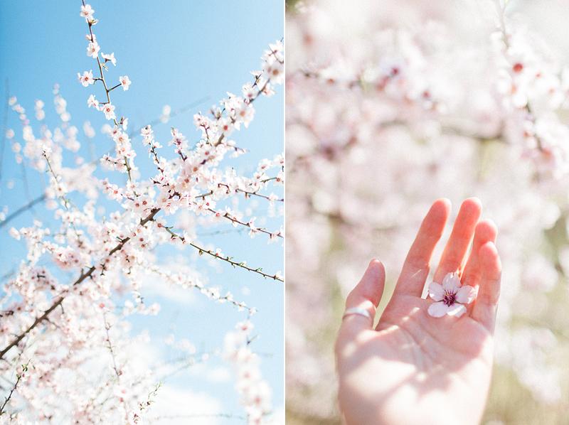 spring-in-Montenegro-by-Sonya-Khegay-01