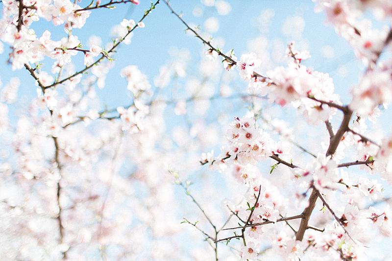 spring-in-Montenegro-by-Sonya-Khegay-02