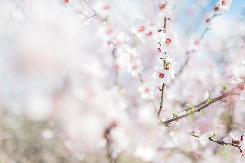 spring-in-Montenegro-by-Sonya-Khegay-03