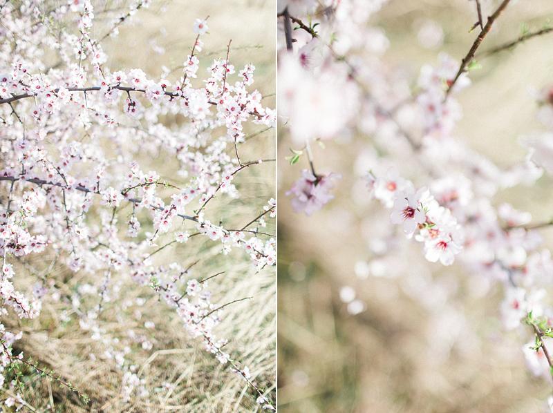spring-in-Montenegro-by-Sonya-Khegay-04
