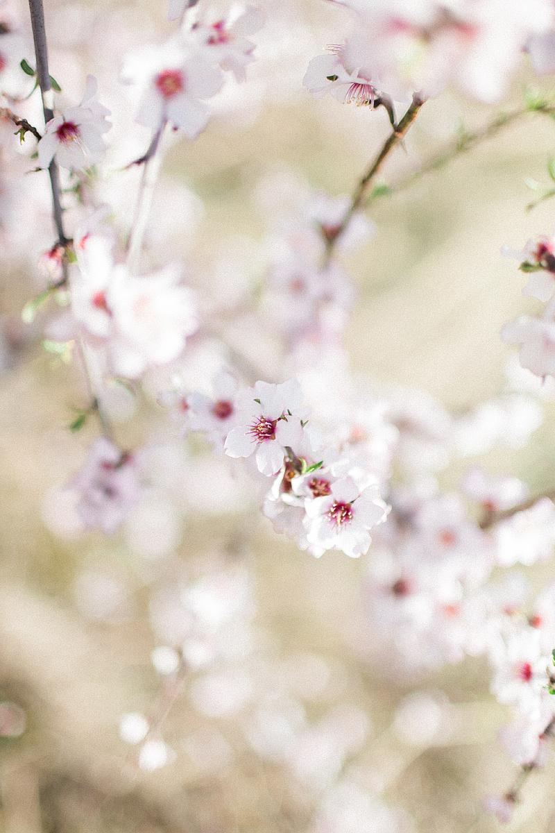 spring-in-Montenegro-by-Sonya-Khegay-05