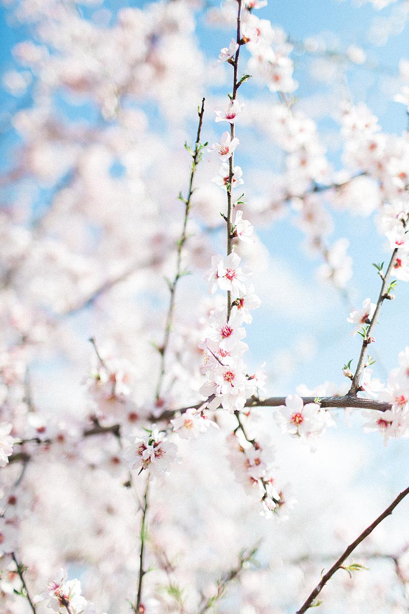 spring-in-Montenegro-by-Sonya-Khegay-06