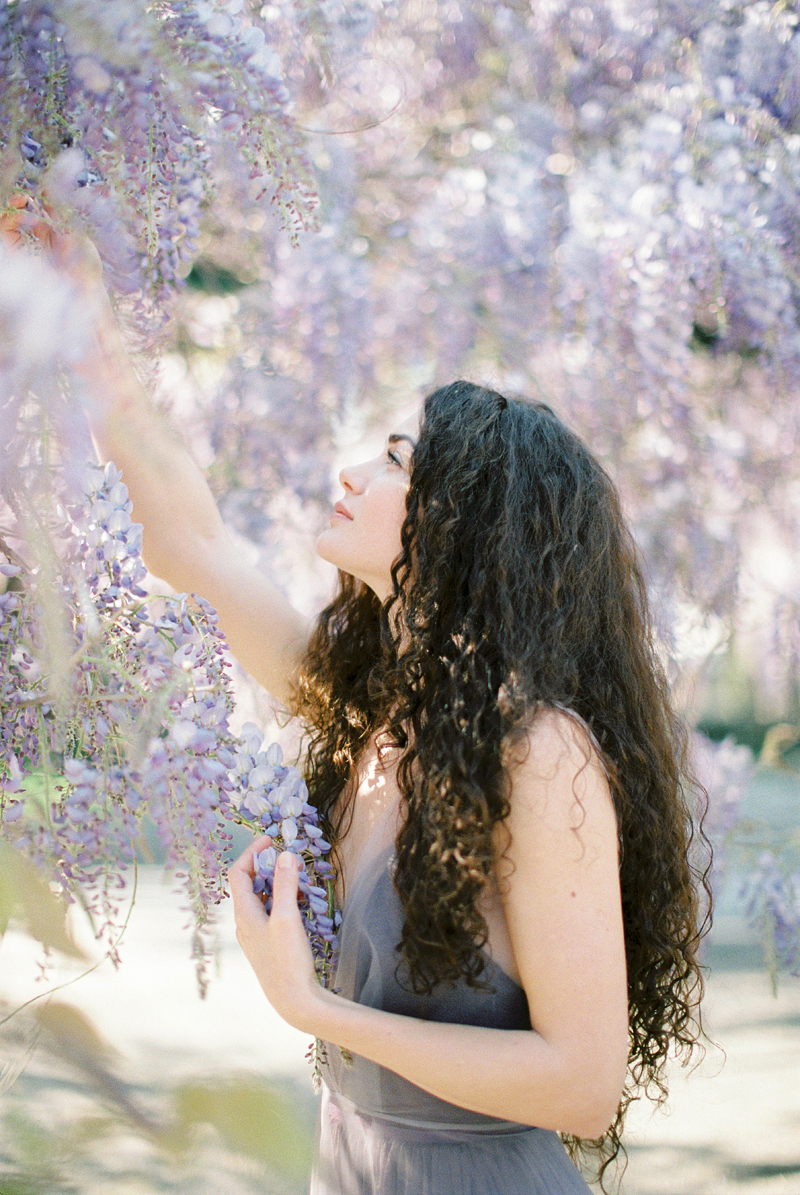 for the love of wisteria 07