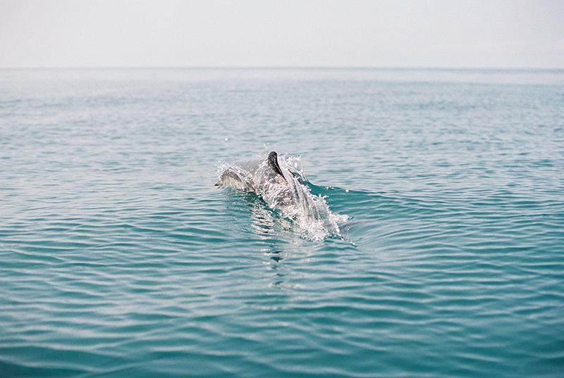 dolphins-by-Sonya-Khegay-02