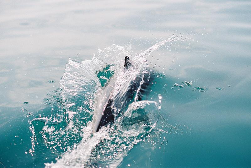 dolphins-by-Sonya-Khegay-05