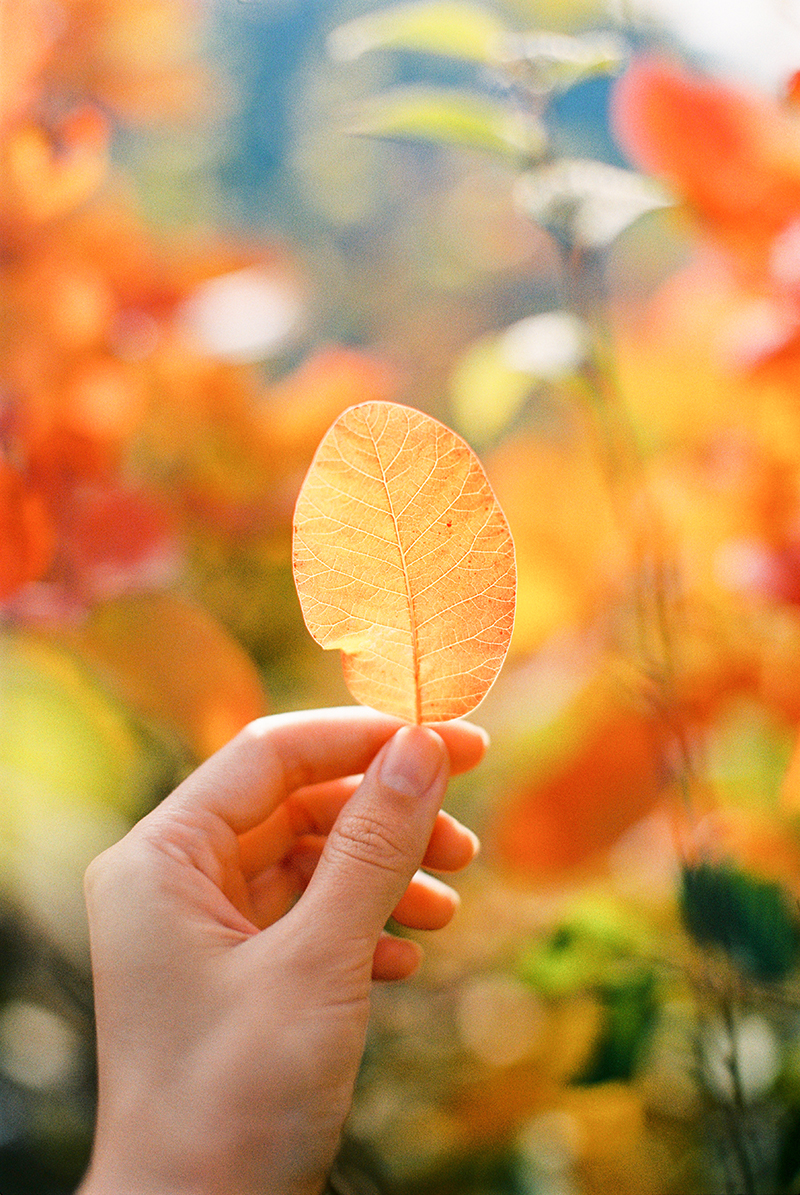 Autumn-North-Montenegro-by-Sonya-Khegay-22