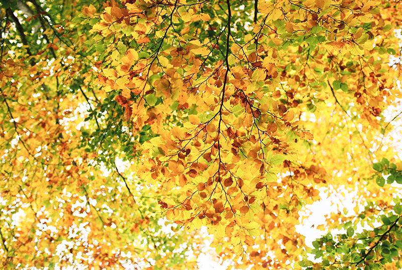 Autumn-North-Montenegro-by-Sonya-Khegay-23