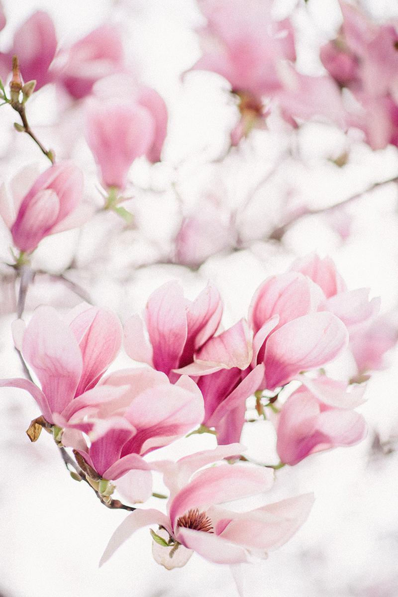 magnolia-by-Sonya-Khegay-01