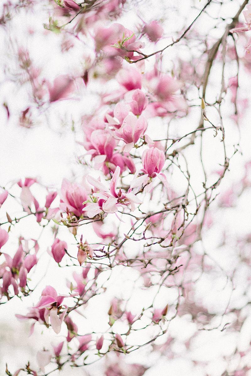 magnolia-by-Sonya-Khegay-03