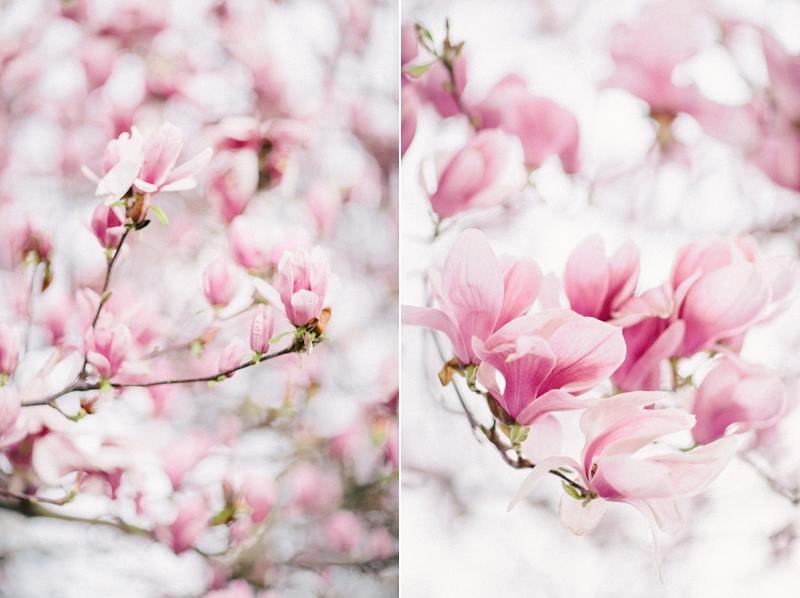 magnolia-by-Sonya-Khegay-04