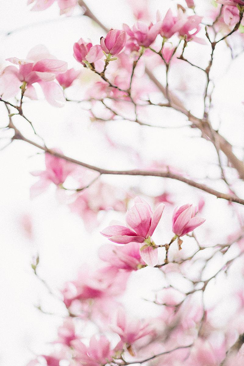 magnolia-by-Sonya-Khegay-05