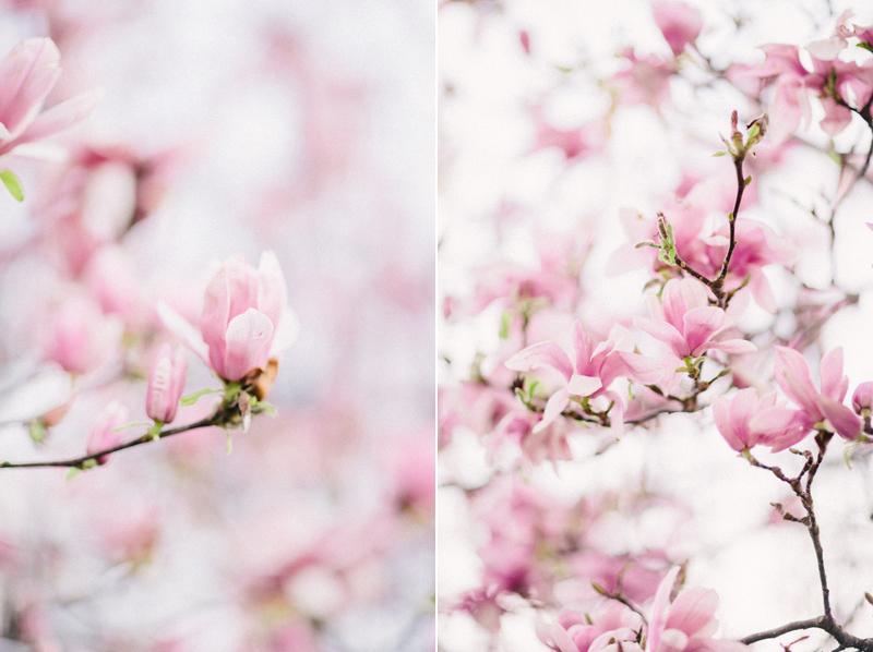 magnolia-by-Sonya-Khegay-06