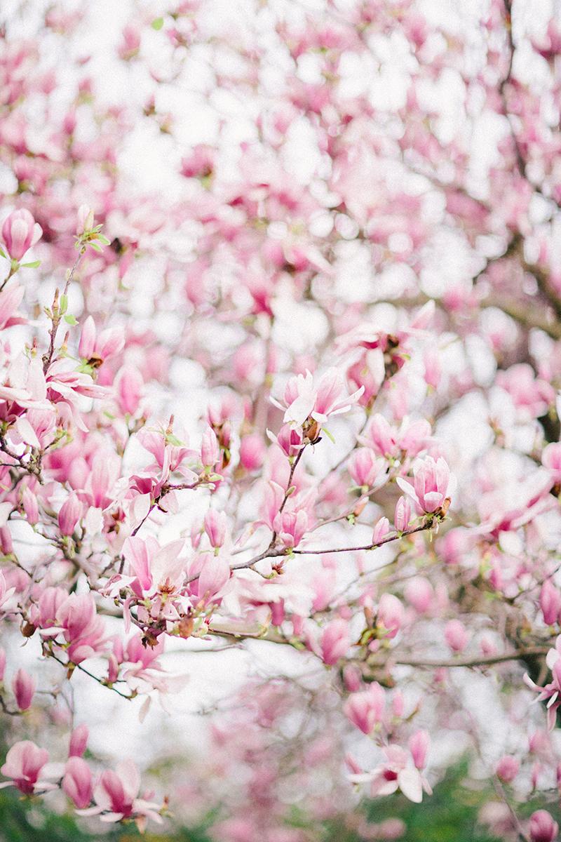 magnolia-by-Sonya-Khegay-07
