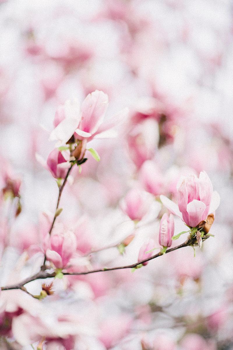 magnolia-by-Sonya-Khegay-08