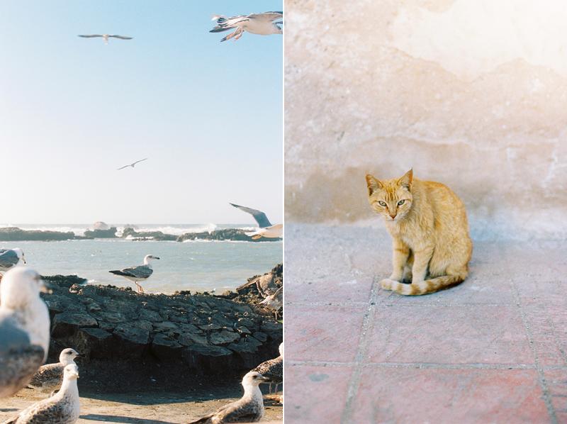 Essaouira-Morocco-by-Sonya-Khegay-13