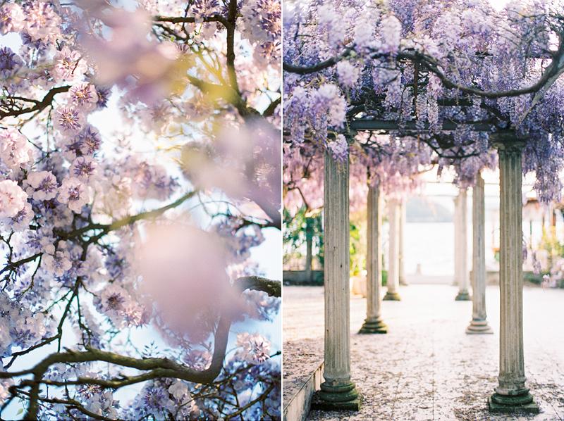 wisteria-is-love-by-Sonya-Khegay-02