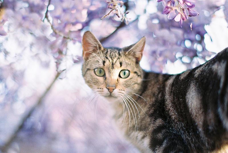 wisteria-is-love-by-Sonya-Khegay-03