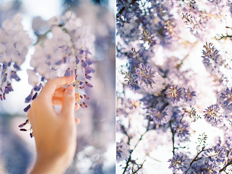 wisteria-is-love-by-Sonya-Khegay-04